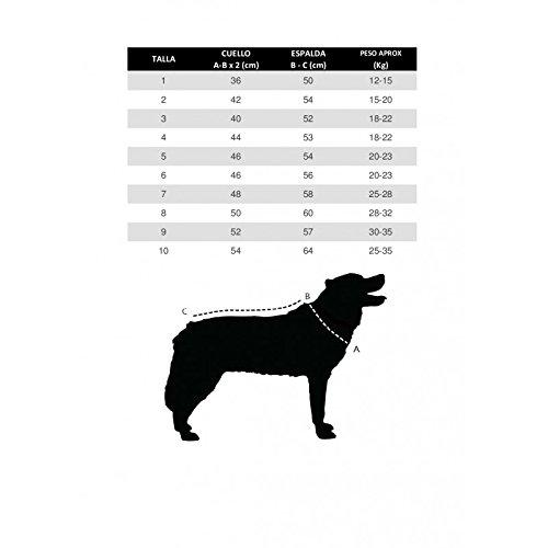 Doggallop DOGHAR9 - Arnés Canicross: Amazon.es: Productos para ...