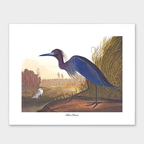 - Blue Heron Bird Art, John James Audubon (Ocean Room Decor, Coastal Water Print) – Unframed