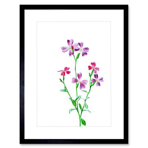 Stock Virginian - Vintage Bright Botanicals Virginian Stock Framed Wall Art Print
