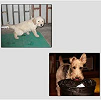 AIAIⓇ Parque para Mascotas Jaula para Vallas de Animales Jaula ...