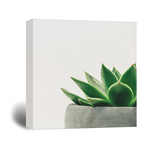 wall26 Square Canvas Wall Art - A Succulent Plant in a Pot - Giclee Print Gallery Wrap Modern Home Decor Ready to Hang - 24x24 inches