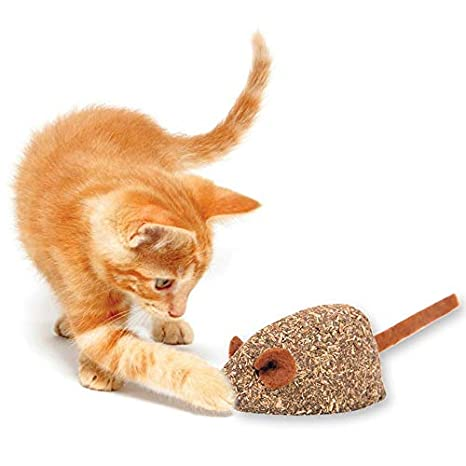 Amazon.com: Juguete comestible para gatos de la mejor ...