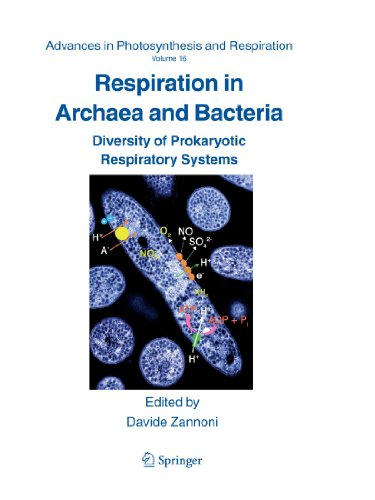 - Respiration in Archaea and Bacteria: Diversity of Prokaryotic Respiratory Systems (Advances in Photosynthesis and Respiration)