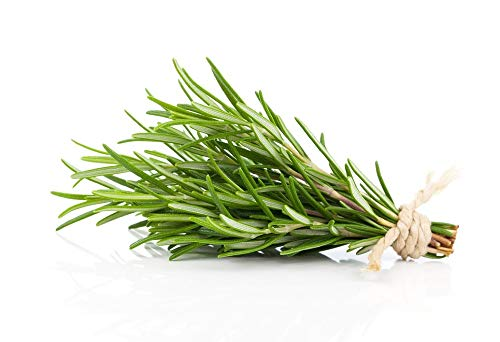 (David's Garden Seeds Herb Rosemary SL9322 (Green) 200 Non-GMO, Heirloom, Seeds)