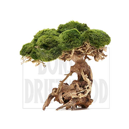 Bonsai Driftwood Aquarium Tree Na 6 Inch Height Natural Handcrafted Fish Tank Decoration Helps Balance Water Ph Levels Stabilizes Environments Buy Online In Belize At Belize Desertcart Com Productid 141388929