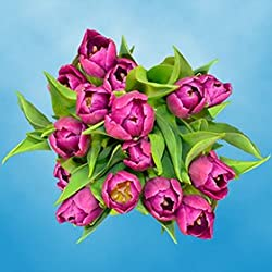 60 Purple Tulip Flowers | Fresh Flowers Wholesale Express Delivery | Perfect for Valentine's Day, Anniversary or any occasion.