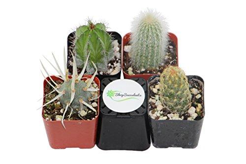 shop-succulents-cactus-4-pack-na
