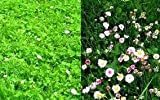 The Dirty Gardener Mix of Low Growing Grass and Flowers Lawn - 20 Pounds