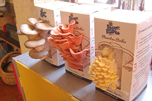 Blue Farmers | Mushrooms | Mushroom Growing Kit | Oyster Mushrooms Grow Kit | Grey, Pink and Yellow Oyster Mushrooms | Grows in 10 Days | Top Gardening Gift | Mothers Day Gifts by Blue Farmers (Image #1)