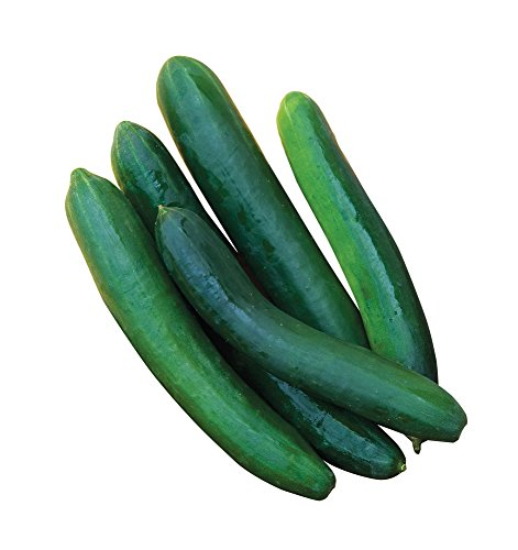 Burpee Sweet Success Slicing Cucumber Seeds 30 seeds