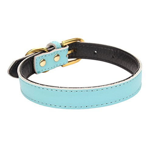 AOLOVE Basic Classic Padded Leather Pet Collars for Cats Puppy Small Medium Dogs (Blue, X-Small)