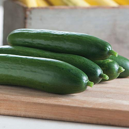 Diva Hybrid Cucumber Garden Seeds - Non-GMO, AAS Award Winner, Gardening Seed 100 Seeds - Hybrid Diva
