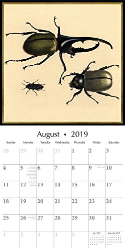 (2019 Wall Calendar - Bugs and Insects Calendar, 12 x 12 Inch Monthly View, 16-Month, Includes 180 Reminder Stickers)