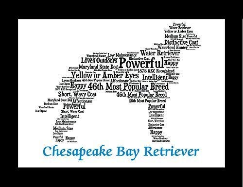 Chesapeake Prints Bay Retriever - Chesapeake Bay Retriever Dog Wall Art Print - Personalized Pet Name - Gift for Her or Him - 11x14 matted - Ships 1 Day