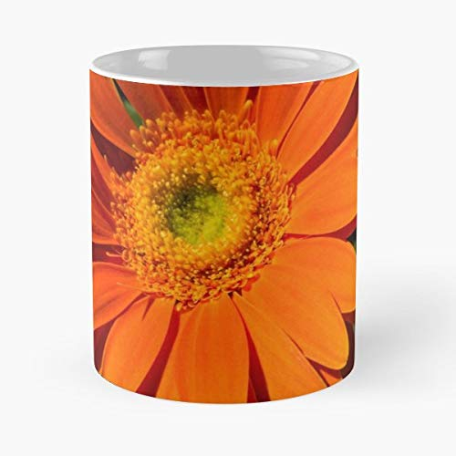 Georgia Mizuleva Georgiam Orange Sunshine Sunlit Daisies - 11oz Novetly Ceramic Cups, Unique Birthday And Holiday Gifts For Mom Mother Wife ()