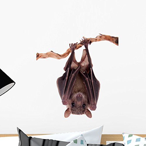 Wallmonkeys Egyptian Fruit Bat Wall Decal Peel and Stick Graphic (18 in H x 12 in W) WM362666 -