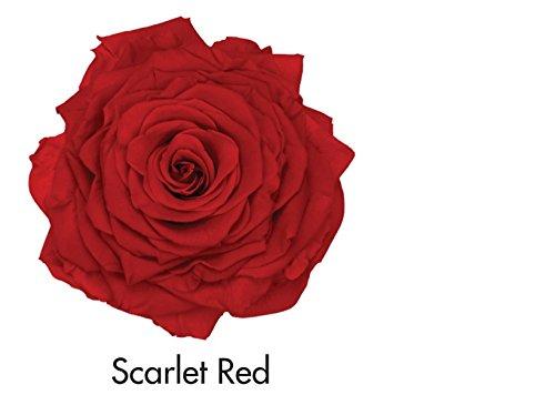 Eternal Roses (Scarlet Red)