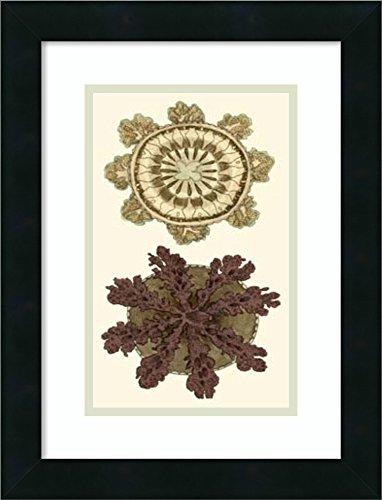 Framed Art Print 'Jewels of the Sea VI' by Frederick P. Nodder - Nodder Jewels