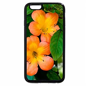 iPhone 6S Plus Case, iPhone 6 Plus Case, Beautiful Orange Primroses