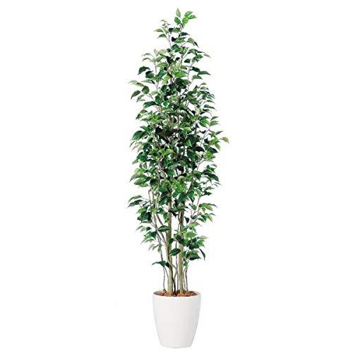 人工観葉植物 ベンジャミンスリムFST180 高さ180cm dt98647 (代引き不可) インテリアグリーン 造花 B07SRDV3D2