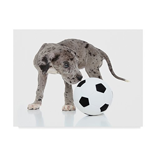 Soccer Ball Puppy by Andrea Mascitti Puppies, 35x47-Inch by Trademark Fine Art