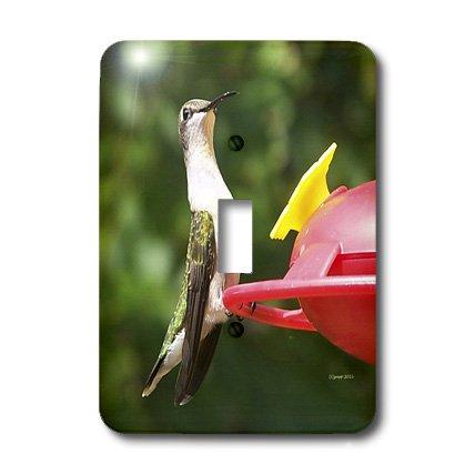 3dRose Lsp_21071_1 Female Ruby Throated Hummingbird Single Toggle ()