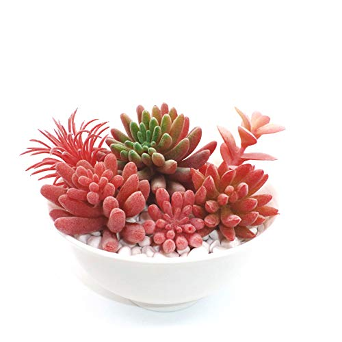 6 Pcs Small Fake Artificial Succulent Plants Unpotted Assorted Fake Plants for Décor DIY Different Types Flocked Red Succulents