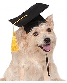 Amazoncom Rubies Blue Graduation Hat Pet Accessory Smallmedium