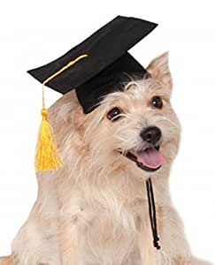 Best Graduation Cap Black Adorable Dog - 41vDLMhxE-L  Gallery_167463  .jpg