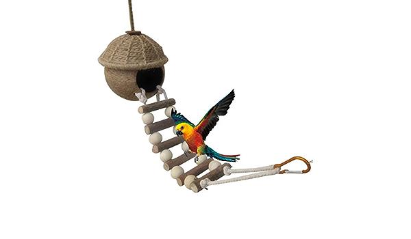 Casa de pájaros con escalera: 100% natural de coco Husk: hermosa casa nido o alimentador de pájaros: materiales sostenibles: texturas naturales para ...