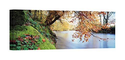 (Easy Art Prints Panoramic Images's 'Trees Along a River, River Dart, Bickleigh, Mid Devon, Devon, England' Premium Canvas Art 30 x 10)
