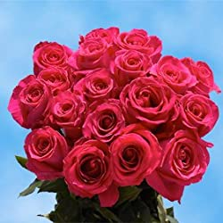 50 Fresh Cut Hot Pink Roses for Valentine's Day | Versilia Roses | Fresh Flowers Express Delivery | The Perfect Valentine's Day Gift
