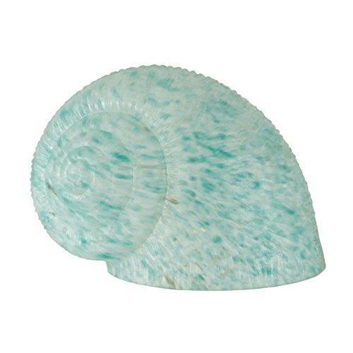 5 Inch W X 6 Inch L Teal Dapple Snail Shade , Shade Only , Meyda by Meyda