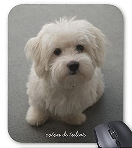 f9eeace0d3637 Amazon.com : Coton de Tulear Mouse Pad Computer Accessories, Gaming Mouse  Mat : Office Products