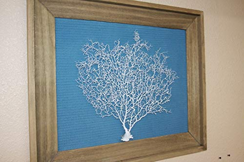 (Salty Pelican Framed Sea Fan Coral Reef Wall Decor Ocean Blue Textured Background, 25 1/2 inch by 21 inch Tall, SF-102)