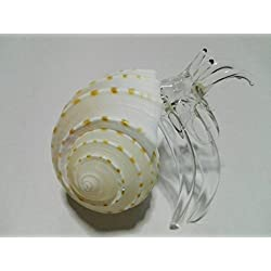 Rare item Nice glass blowing hermit crab natural seashell : ( hermit crab Big )