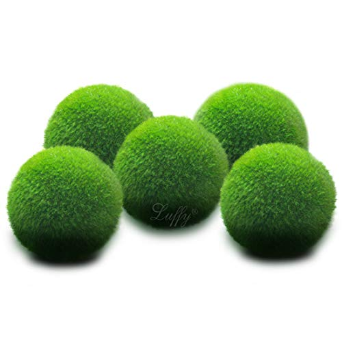 5 LUFFY Marimo Moss Balls - Jumbo Pack of Aesthetically Beautiful & Create Healthy Environment - Eco-Friendly, Low Maintenance - Shrimps & Snails Love Them