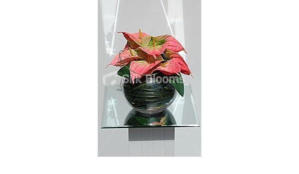 Premium Bright Anthurium arreglo Floral Jarrón con efecto piel de melocotón y pecera: Amazon.es: Hogar