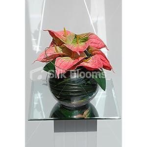 Premium Bright Peach Anthurium Fishbowl Vase Floral Arrangement 113