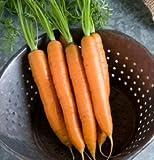 Carrot Yaya D2681A (Orange) 200 Organic Seeds by David's Garden Seeds