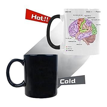 Amazon.com: InterestPrint 11oz Love Anatomy of the Human Brain ...