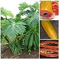 """Vietnamese Dwarf Cylindrical Papaya """"Kaek dahm"""" Low Bearing Tree Papaya 50 Seeds"""