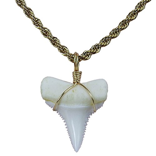 - GemShark Real Shark Tooth Necklace Megalodon 14K Gold Great White Sharks Hip Hop Black Cord Chain (0.8 inch Tooth)