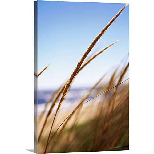 GREATBIGCANVAS Gallery-Wrapped Canvas Wheat Grass at Lake, Park Point Beach, Duluth, MN by 12