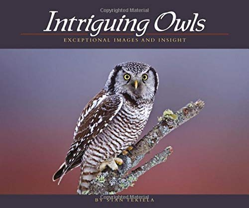 Intriguing Owls: Exceptional Images and Insight (Wildlife Appreciation)