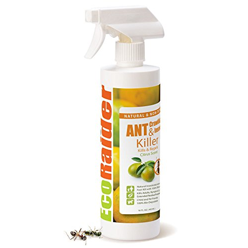 EcoRaider Ant Killer & Crawling Insect Killer (Citrus Scent) 16 OZ, Natural & (Ant Killer Indoors)