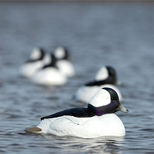 Hunting Gear Over-Size Buffleheads (1/2 Dozen) by Avery (Image #3)