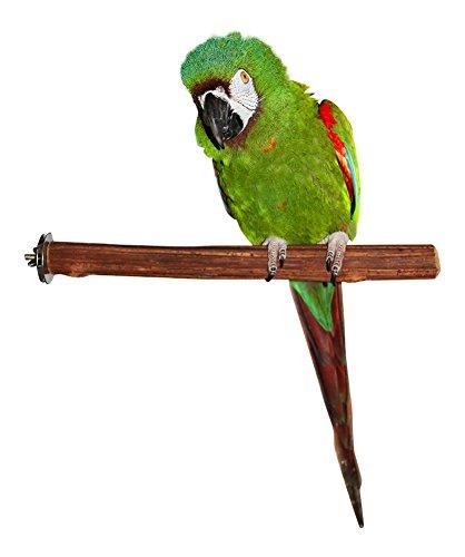 Medium Bird Perch (Birds LOVE Rattan Wood Perch Medium)