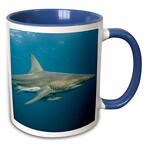 3dRose Danita Delimont - Sharks - Black-tip shark and Remora, KwaZulu-Natal, South Africa - 15oz Two-Tone Blue Mug (mug_225119_11)
