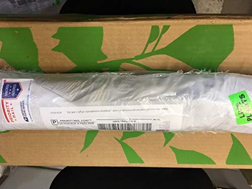 8 Planting White Pine Sapling Trees 12inch Evergreen seedling transplants #HSE by NurserySeedlings.Co (Image #5)